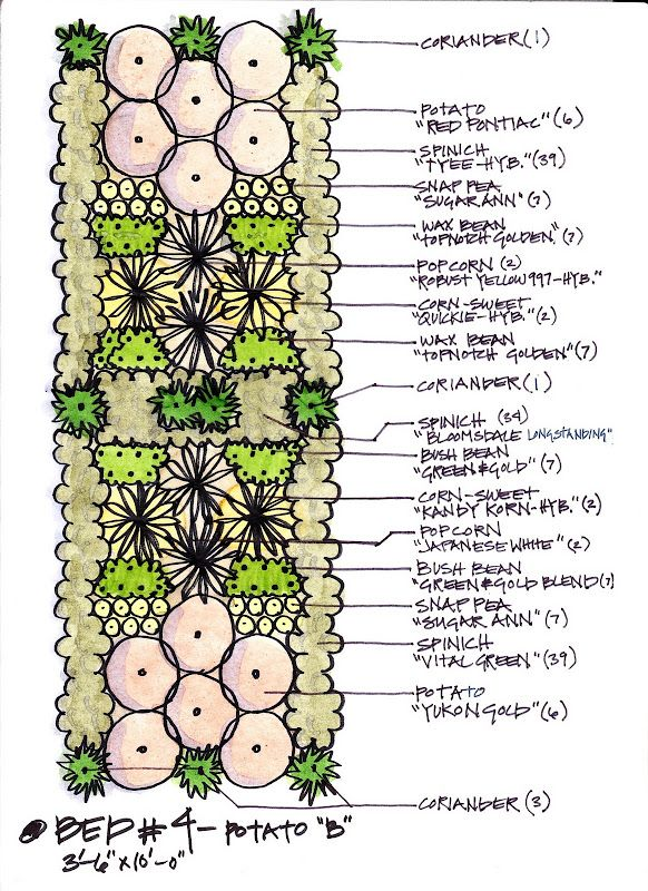 Companion Plant Layout Homesteading/Self-Sufficient Living