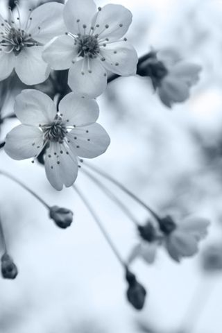 Black And White Grey Flowers Flowers Android Wallpaper