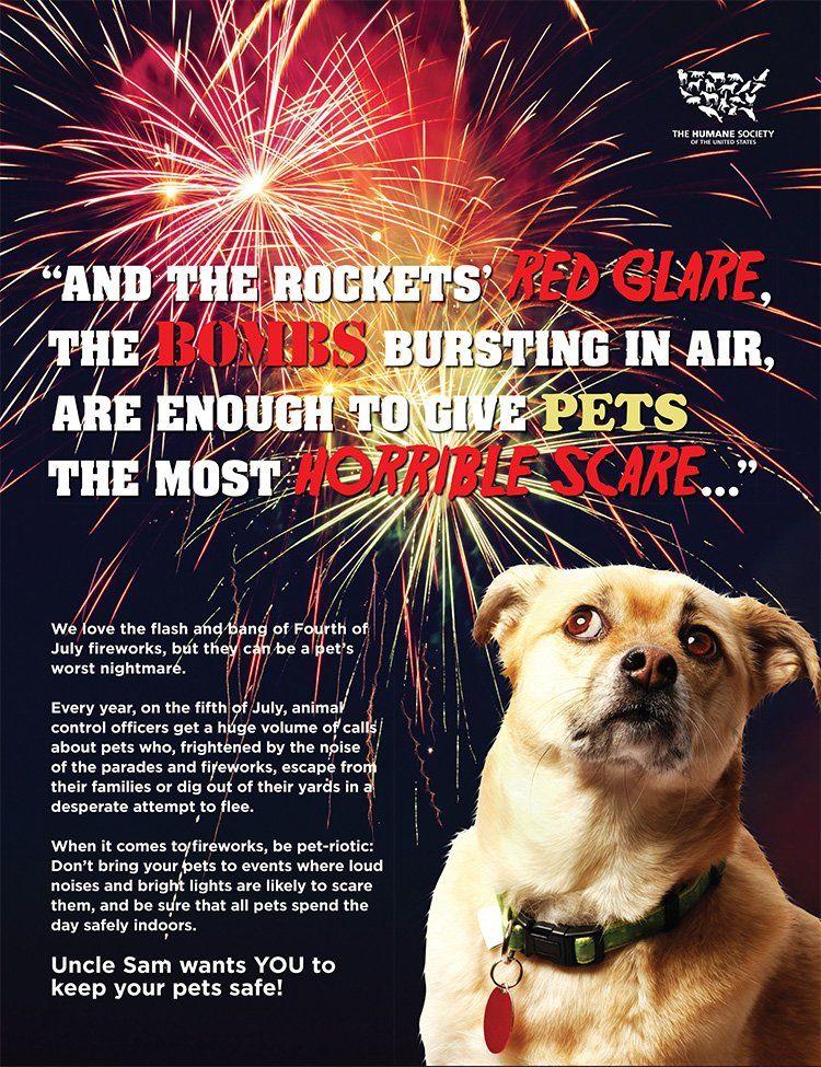 Animal Sheltering on Dogs, fireworks, Pet safe, Pets
