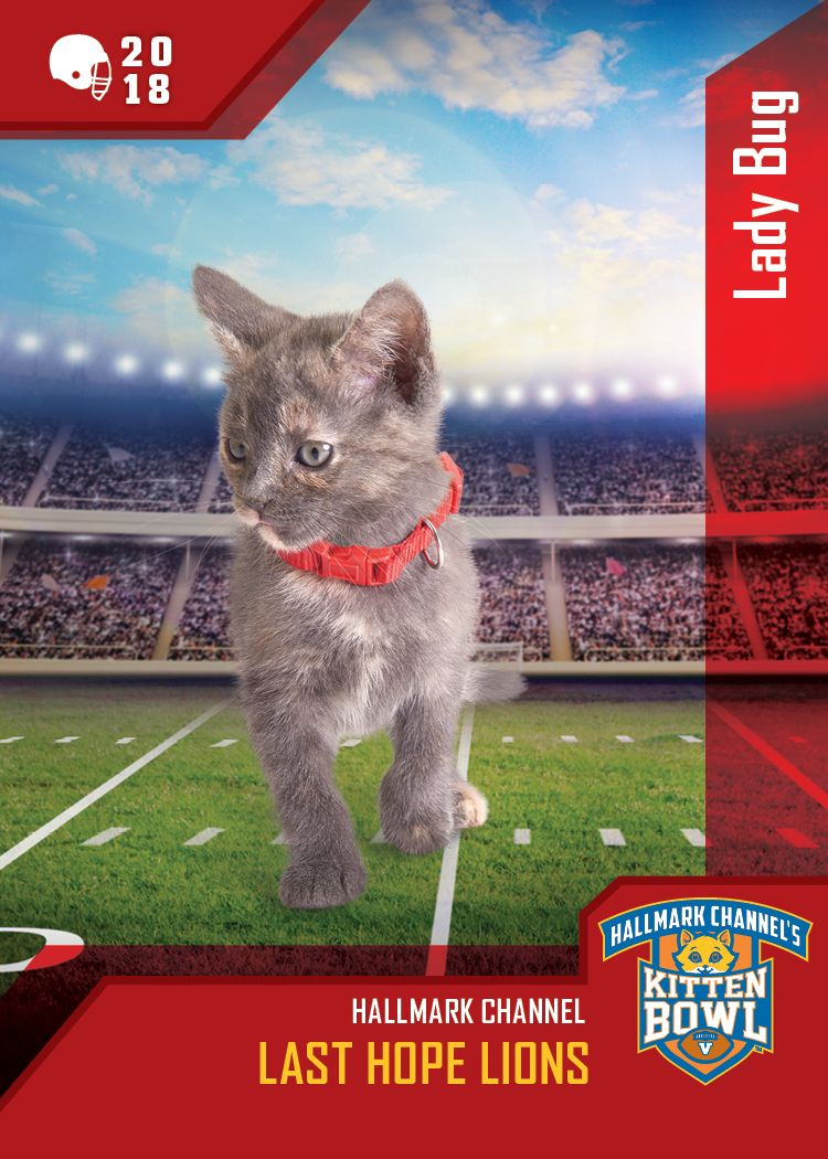 Kitten Bowl V Ladybug Will Put The Smackdown On With Her Paw As Her Team The Last Hope Lions Take The Field On February 4 Kitten Bowls Kittens Kittens Cutest