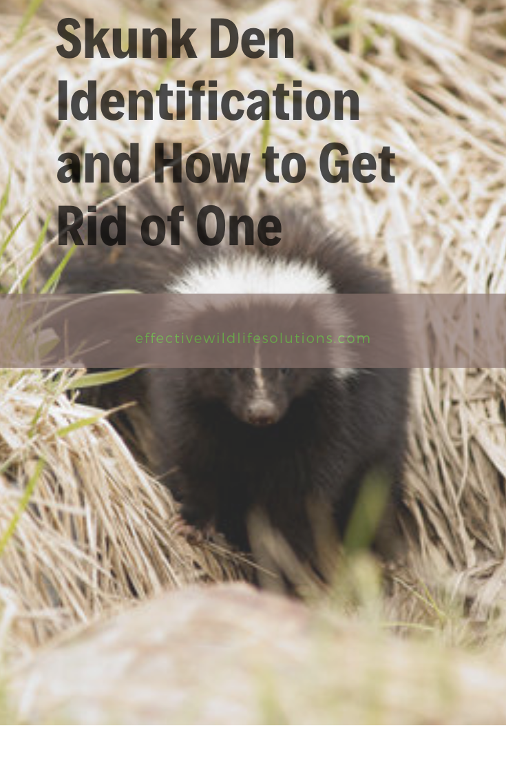 Are you looking for tips for getting rid of skunk dens in ...