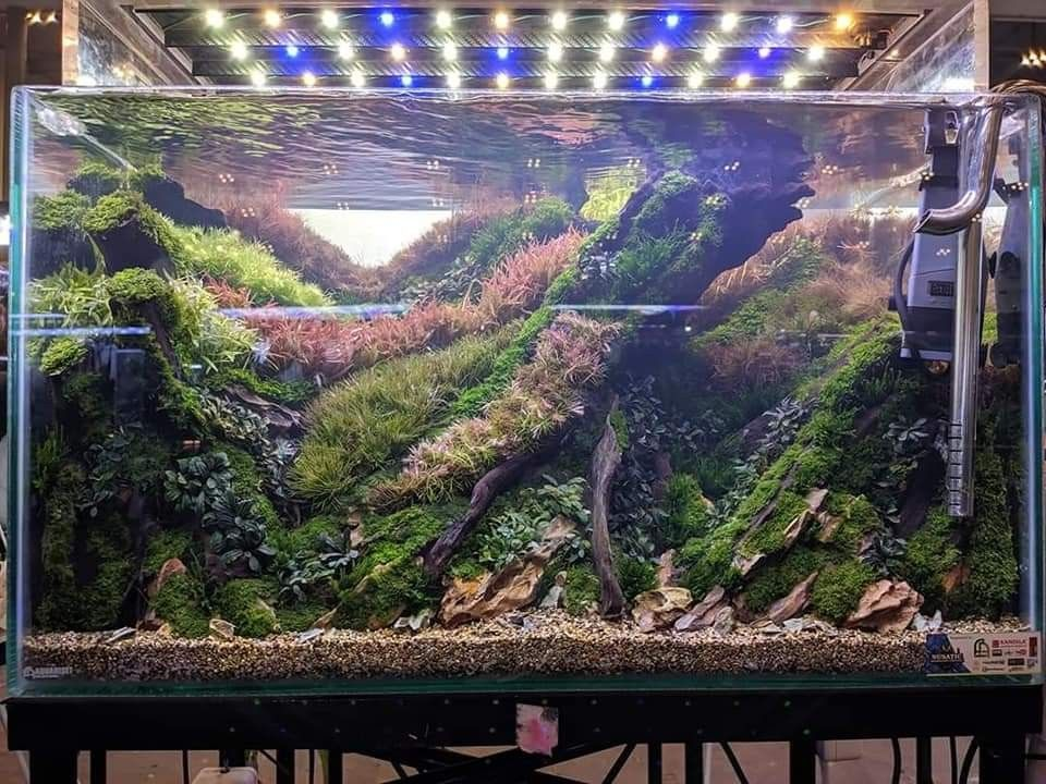 Nusatic 2019 indonesia aquascape