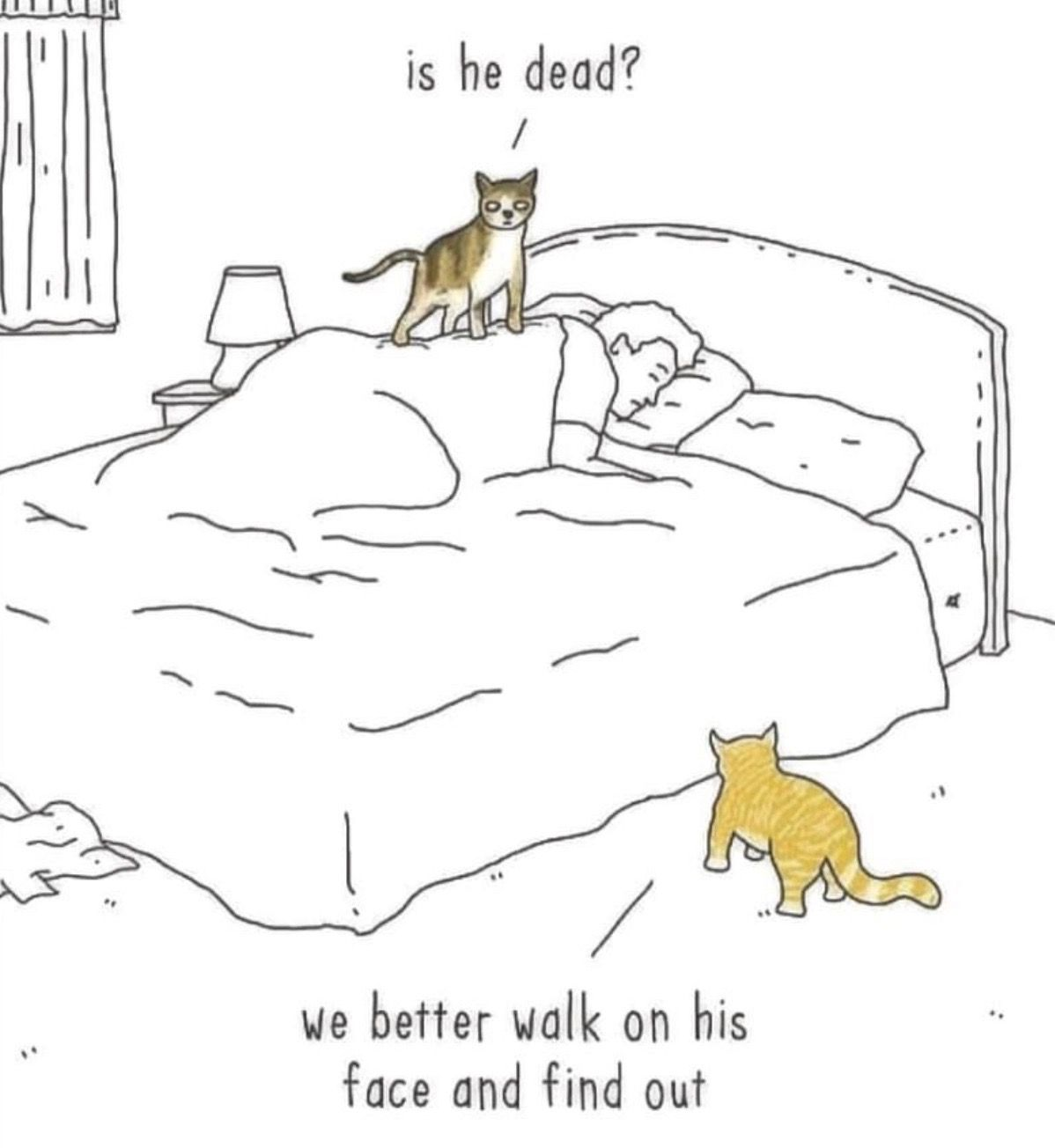 Pin By Lef On Cat Lady Cats Kittens Crazy Cats Funny Cats
