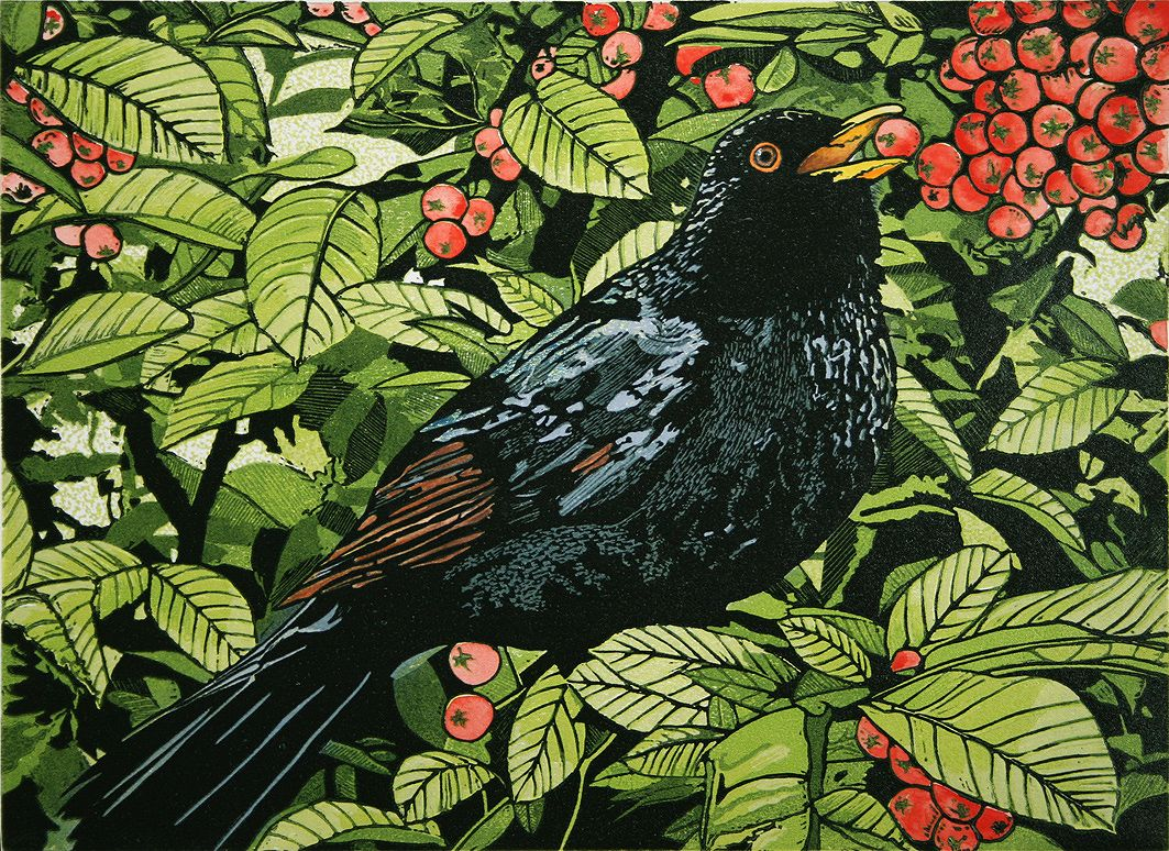 Blackbird in a Pyracanthas bush. Reduction Linocut