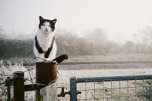 Black and White Cat on a Fence in the Fog