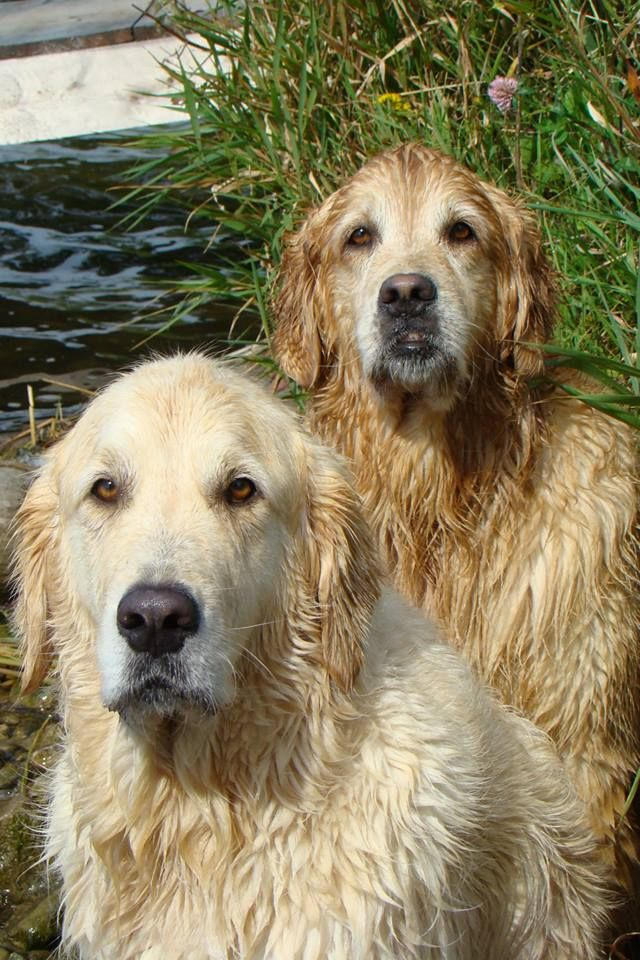Half Brother And Half Sister Bentley And Brie At White Lake Ontario Orange Kittens White Lake Golden Retriever