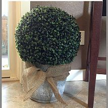 Hometalk :: a galvanized bucket with boxwood and an old galvanized washtub for flo…