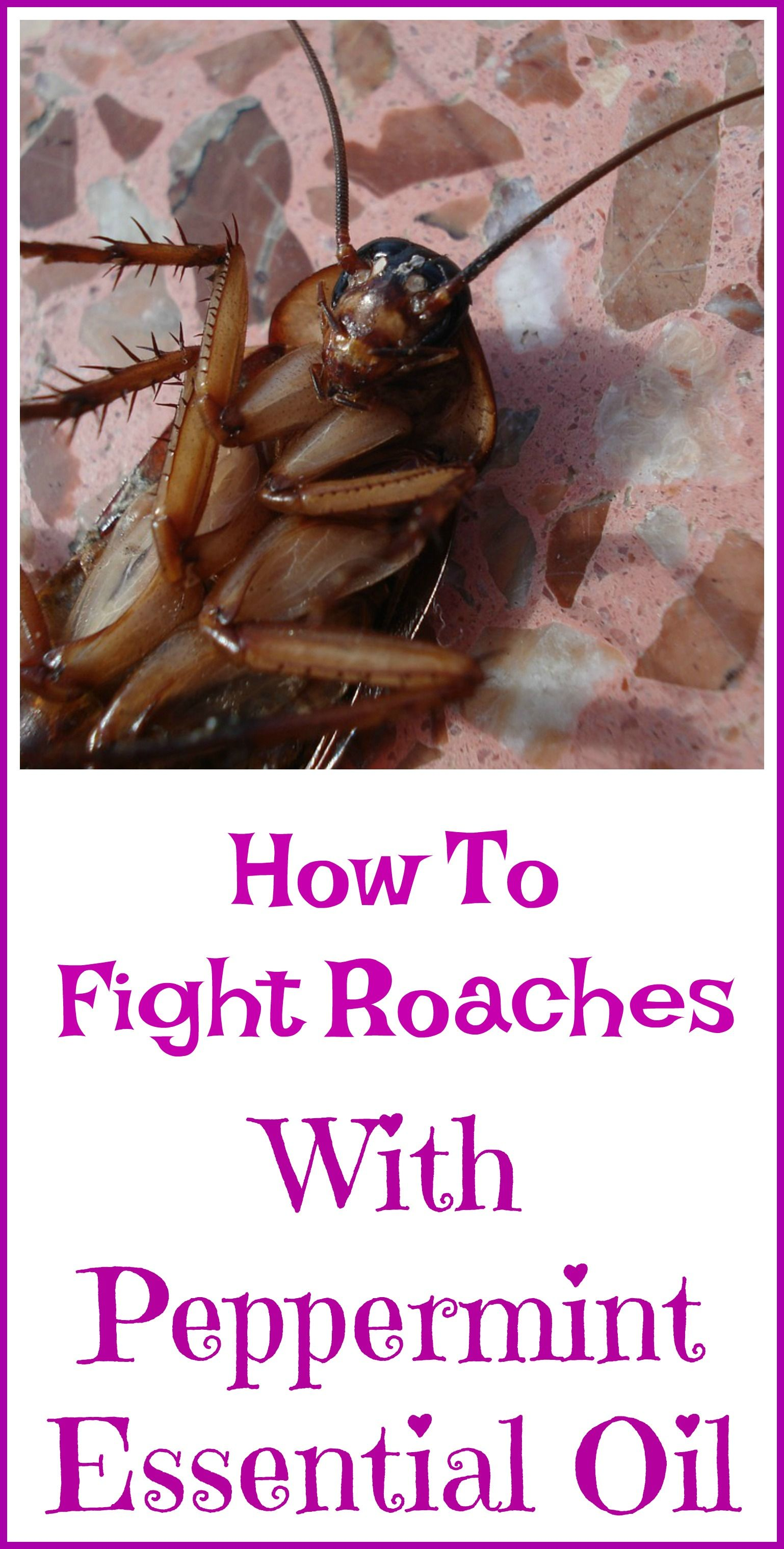 Peppermint Oil For Roaches Pepermint Oil Uses Holistic Healing