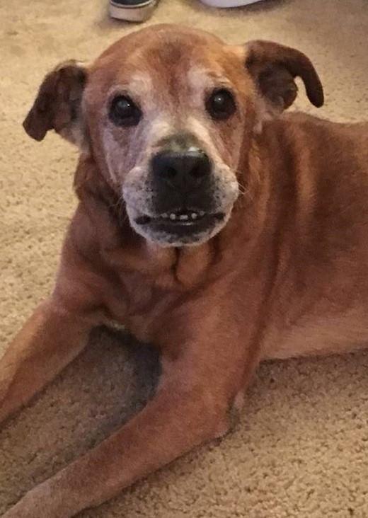 Täglich wartet dieser 17jährige Hund im Tierheim. Doch