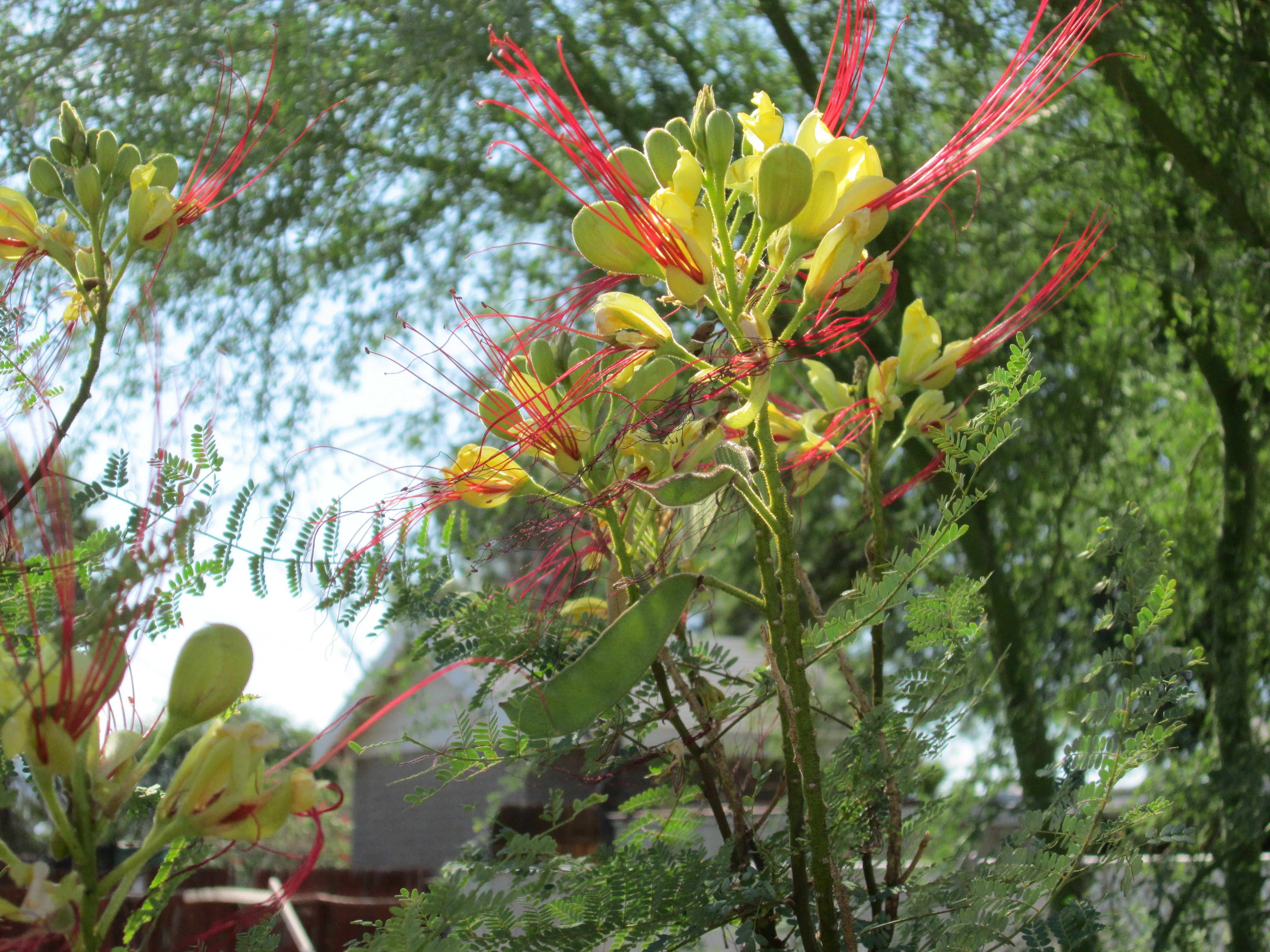 Drought Tolerant Plant Tjs Garden Drought Tolerant Pinterest