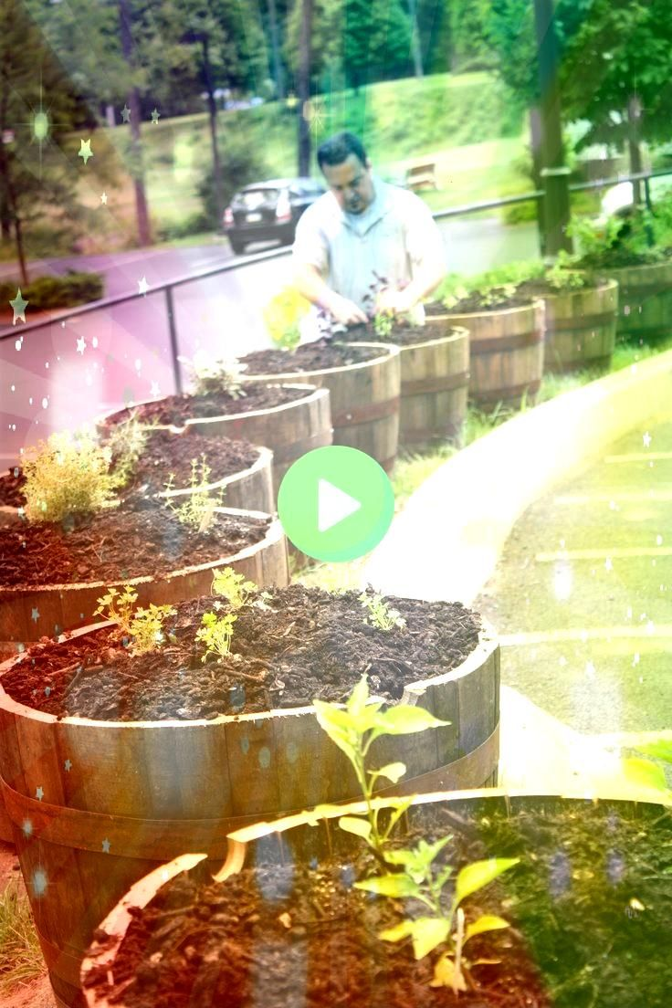 7 7 A long raised bed is used to grow radishes Photo Evan Sung for The New York Times Introducing the Aquacorner System Raised Bed Watering  Gardeners Supply vegetable ga...