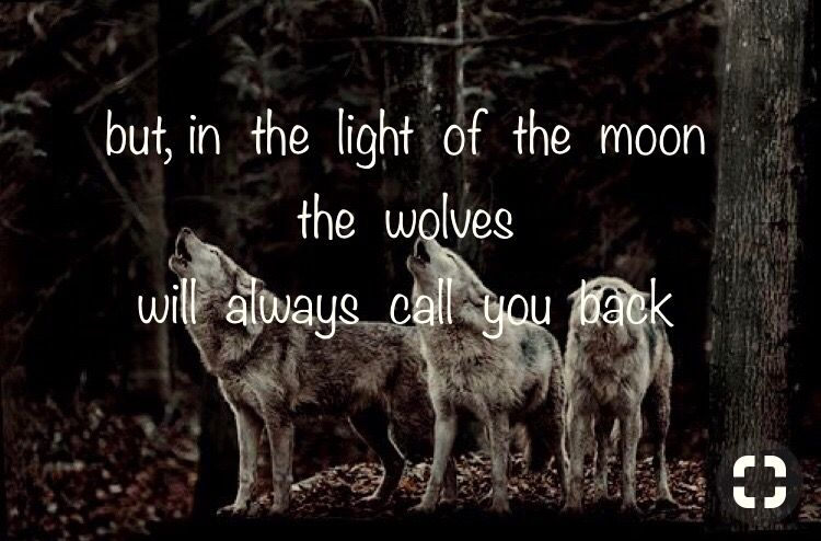 A Dog Steps Loyal Right Behind You But A Wolf Fights Loyal Beside