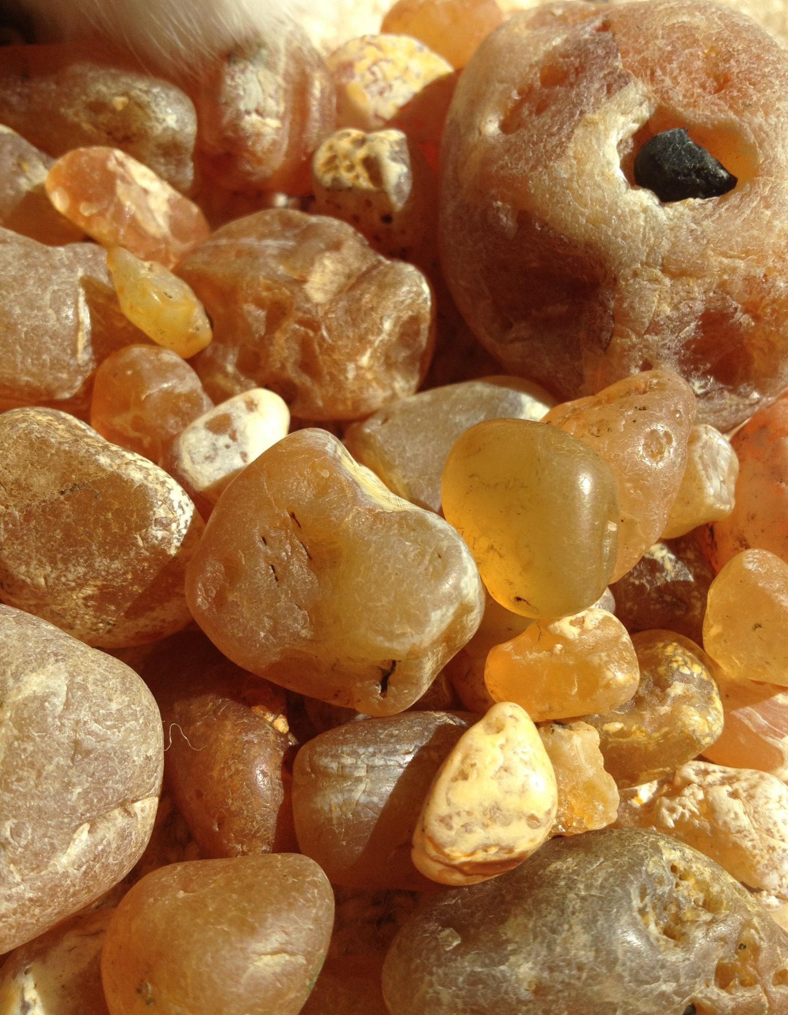 Agates from gleneden beach oregon coast 5 miles south of