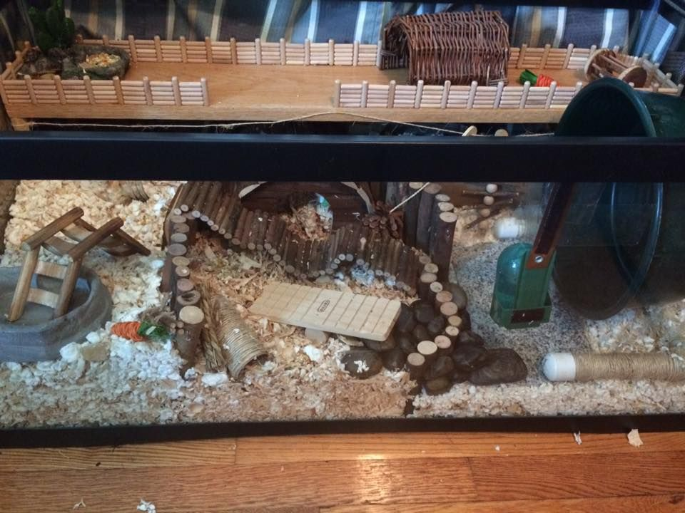 Bernie Aka Bubbe Came 1 Year And 4 Months Early Page 16 Hamster Diy Hamster Tank Hamster