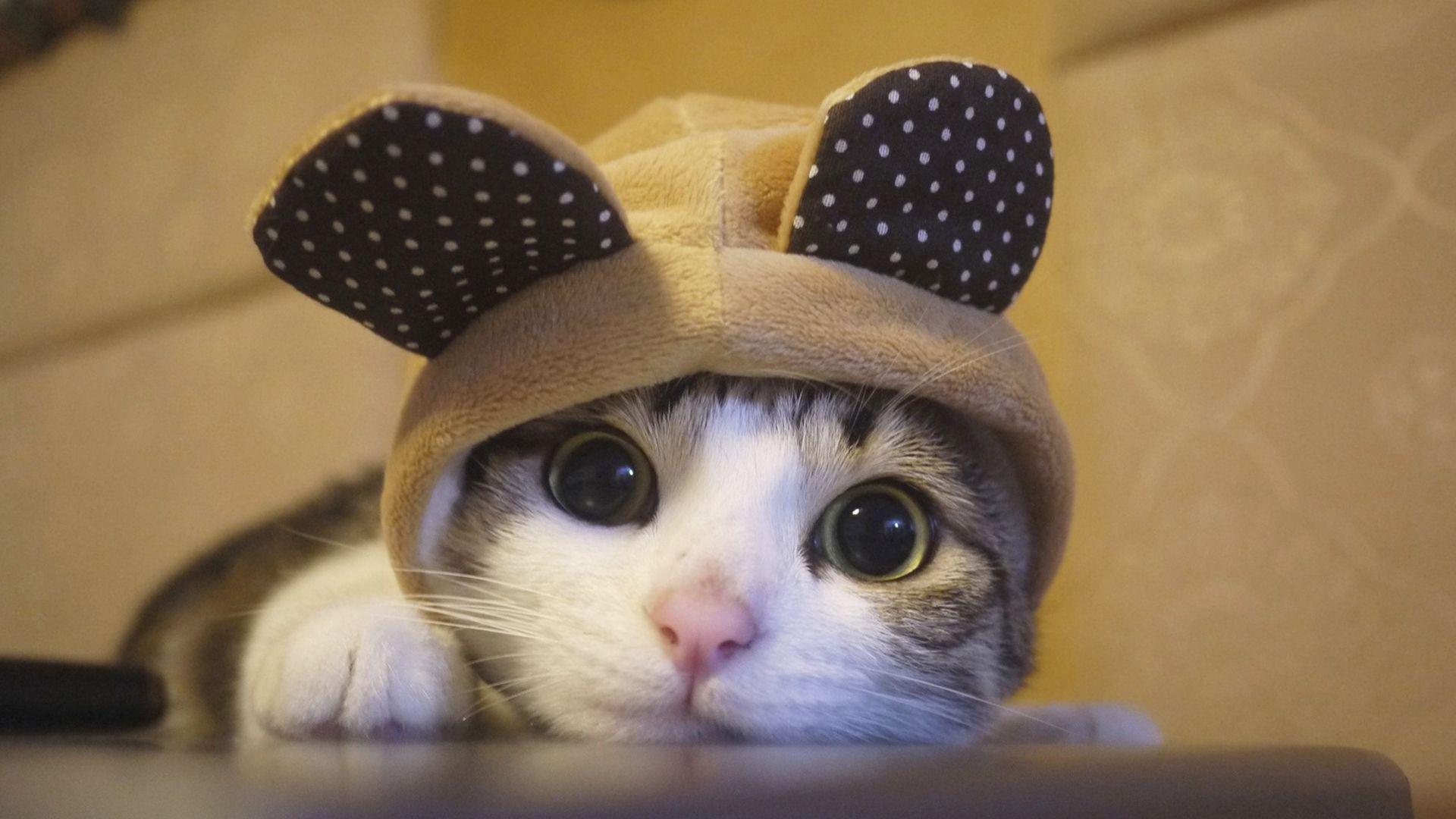 Cute cat in cat costume wallpaper kittens cutest cats