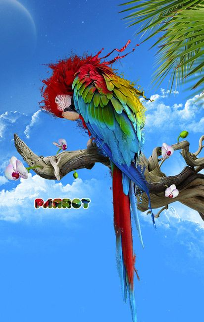 Red Parrot Bird Animals Desktop Wallpapers Download Animals Hd