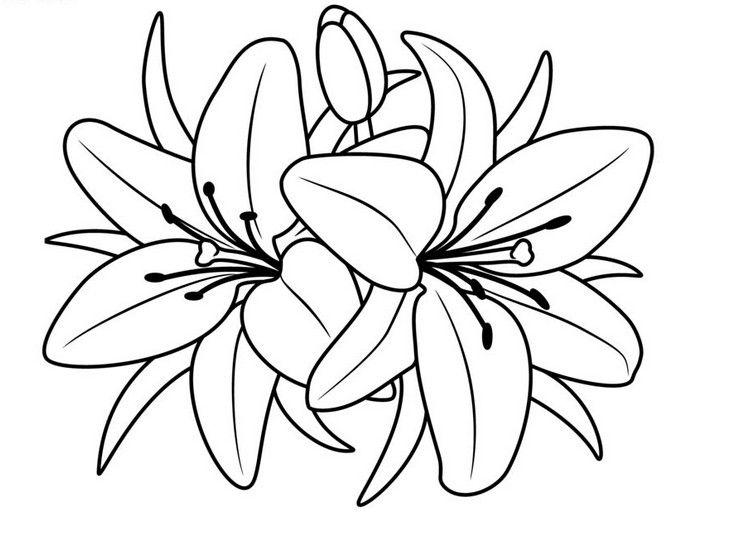 Виде, рисунок большие цветы