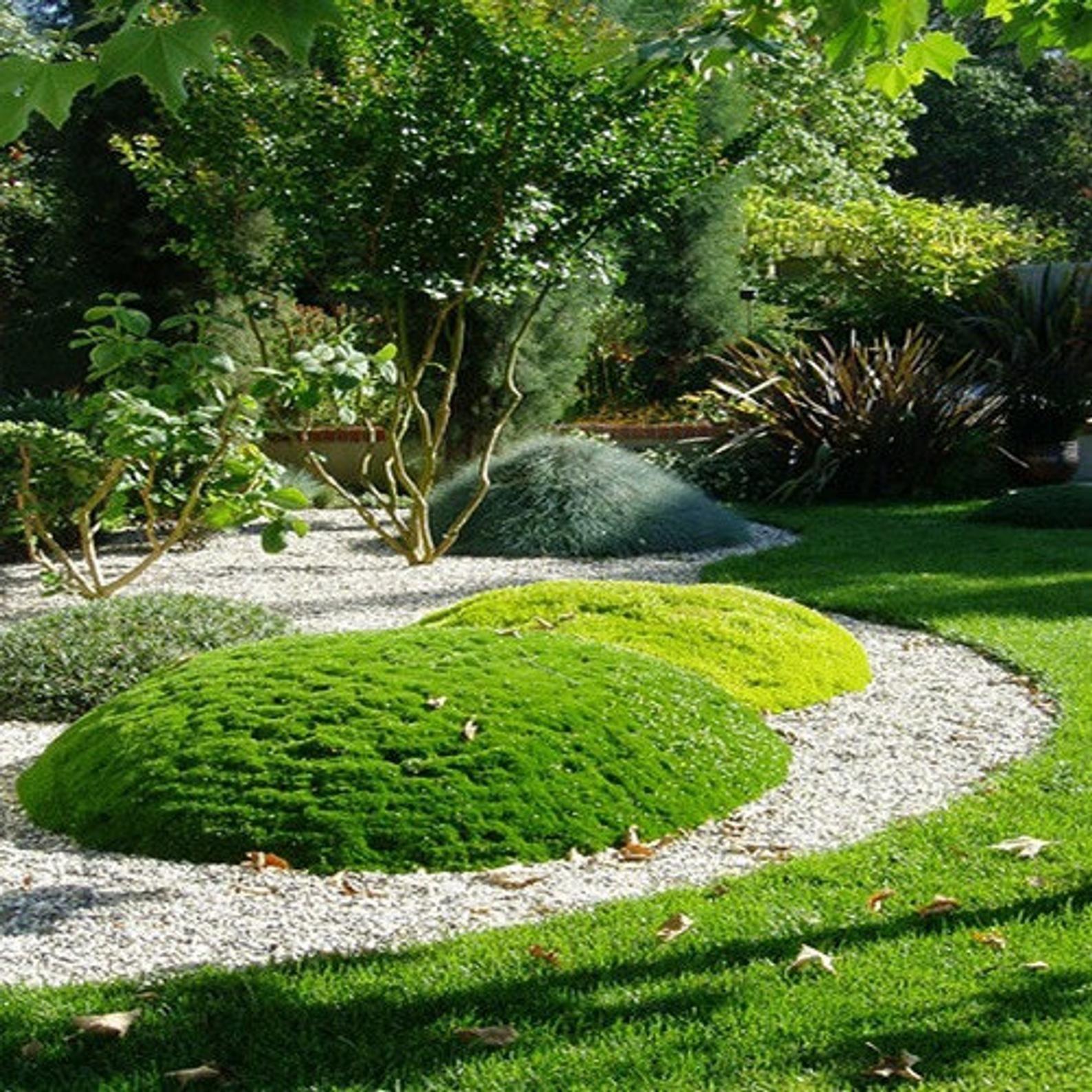 Irish Moss Ground Cover Seeds Sagina Subulata 200 Seeds