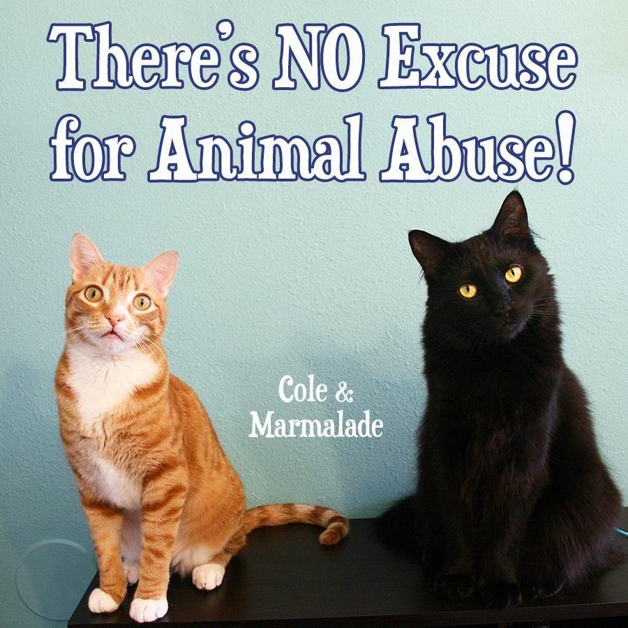 Cole Marmalade On Twitter Animal Antics Animal Abuse Animals