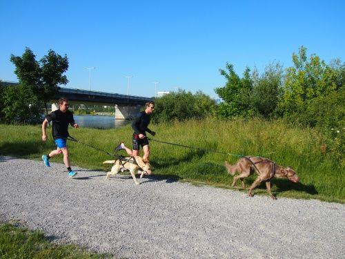 Hund und Mensch sind durch eine Leine miteinander verbunden. Der Hund gibt eindeutig Richtung und Tempo vor. #Donauinsel