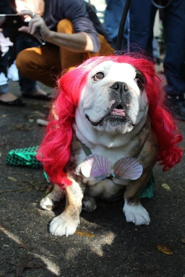 12 Under the Sea Costumes for Your Pup | Pets | Dog costumes