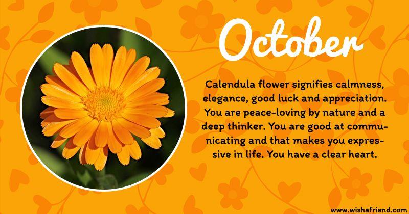 October Birth Flower Calendula October Flowers October Birth Flowers Birth Flowers