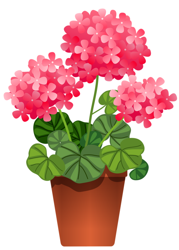 5 png potted flowers flowers and clip art rh pinterest com