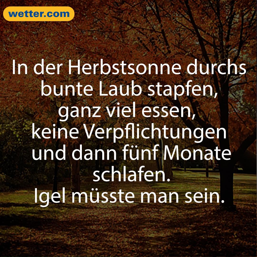 Wetter November 2020 Winterfans Brauchen Noch Geduld Herbst Spruch Lustige Spruche Spruche