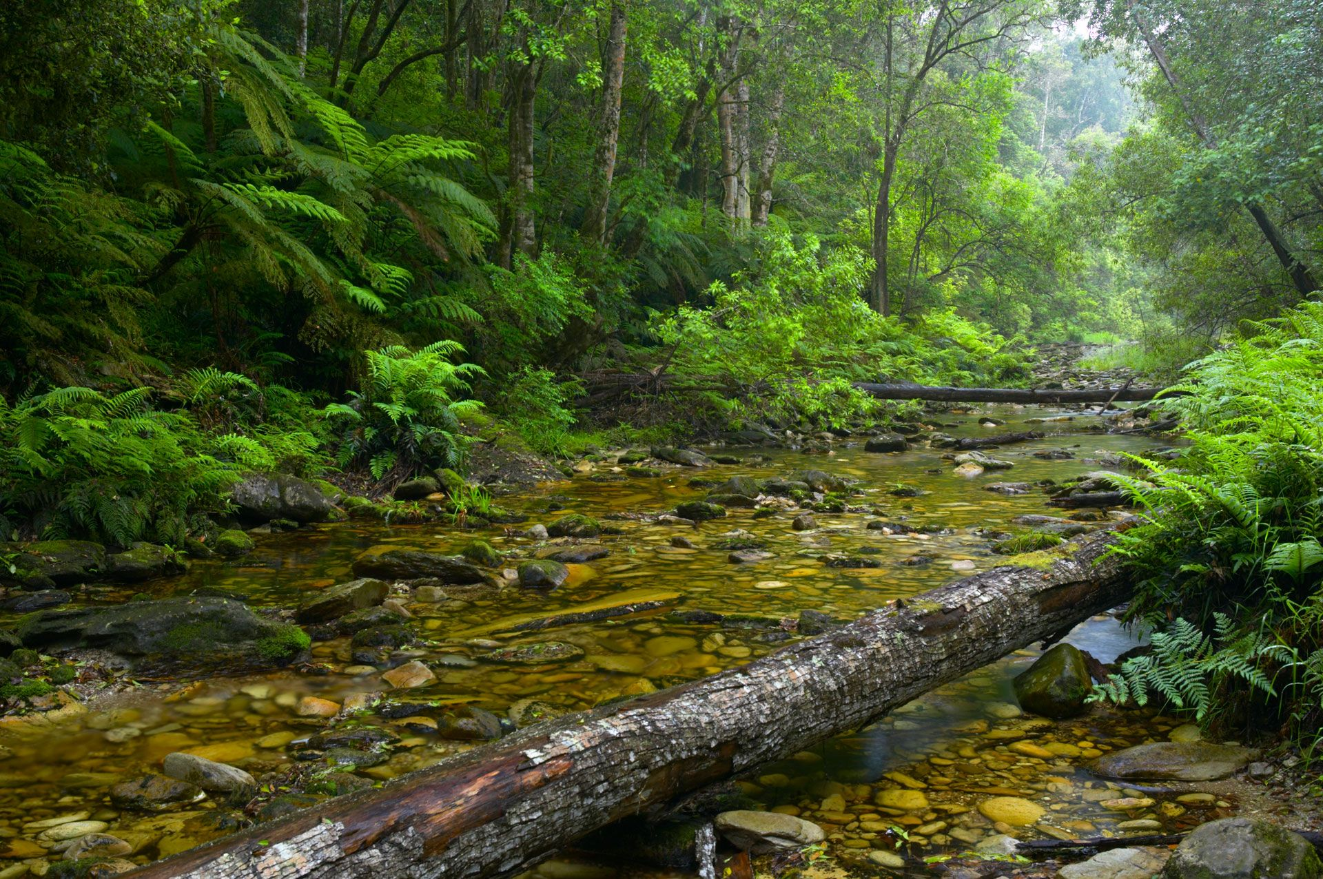 Knysna Forest, South Africa Countless streams flow from