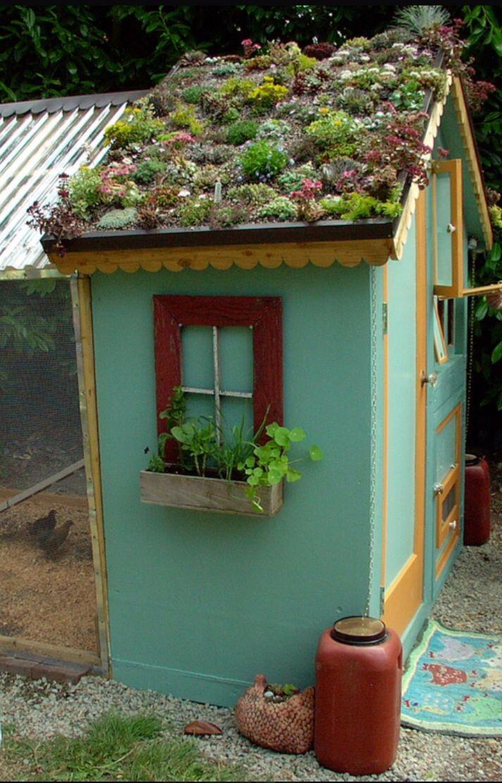 Green Roof En Coop