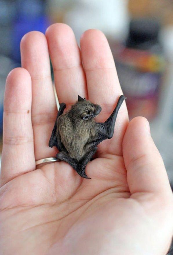 Tiny, tiny bat creature-feature