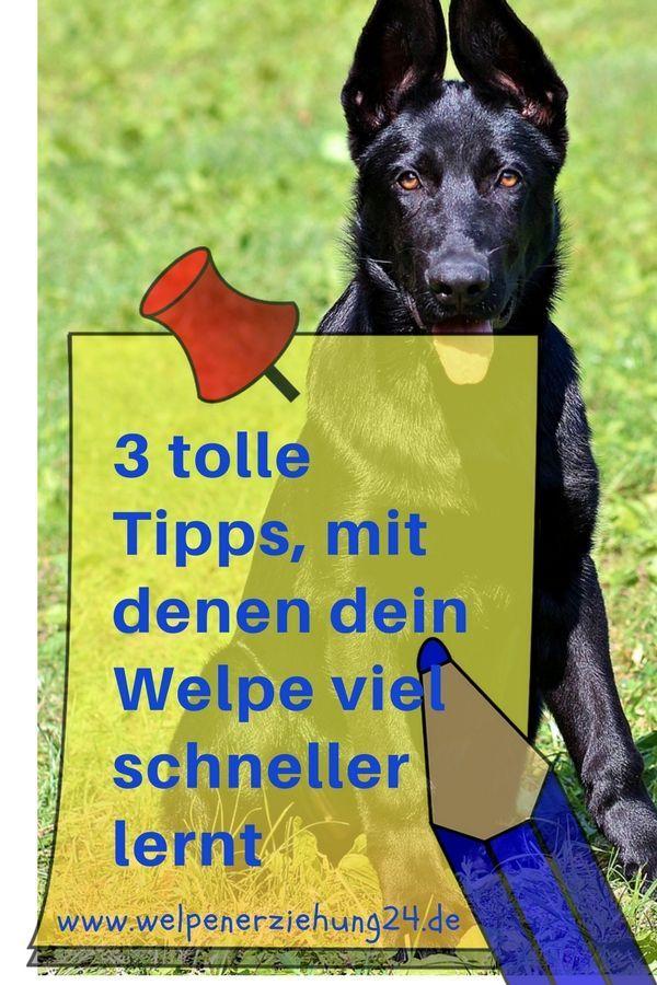 3 Tipps Fur Schnelle Lernerfolge Beim Welpen Welpenerziehung Welpen Welpen Erziehen Hunde Welpen Erziehung