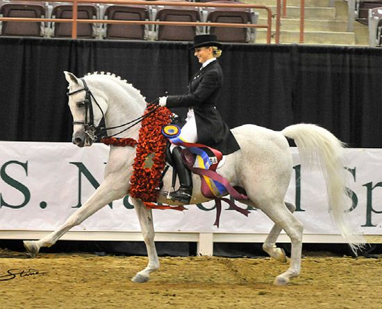 Quarab made her debut at Grand Prix today! - Arabian Horse ...