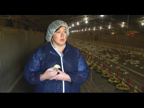 Biosecurity and Health Management on Chicken Farms | Poultry