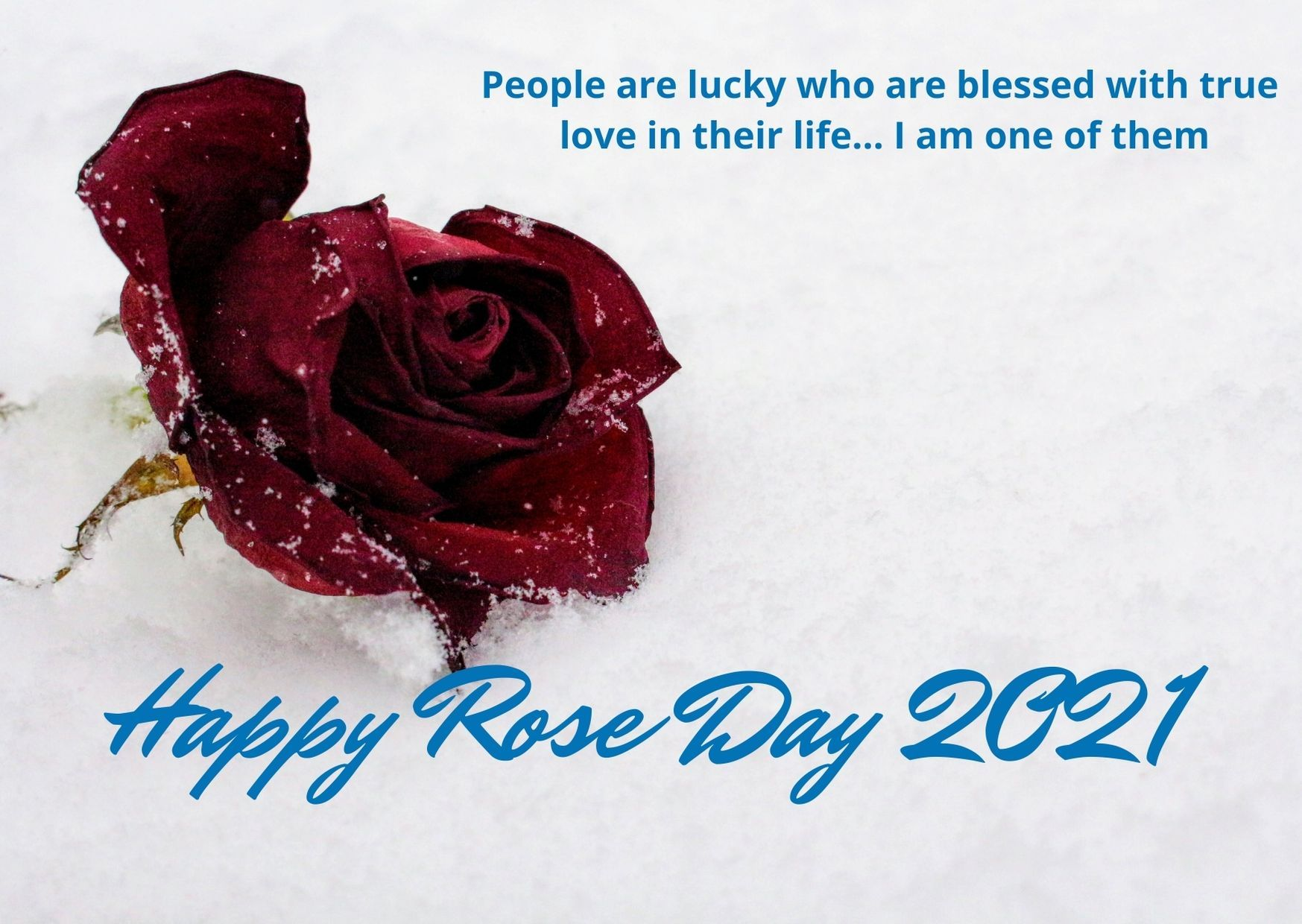 Happy Rose Day Images 2021 Happy Valentines Day Happy Valentine Rose Images photos love rose day 2021