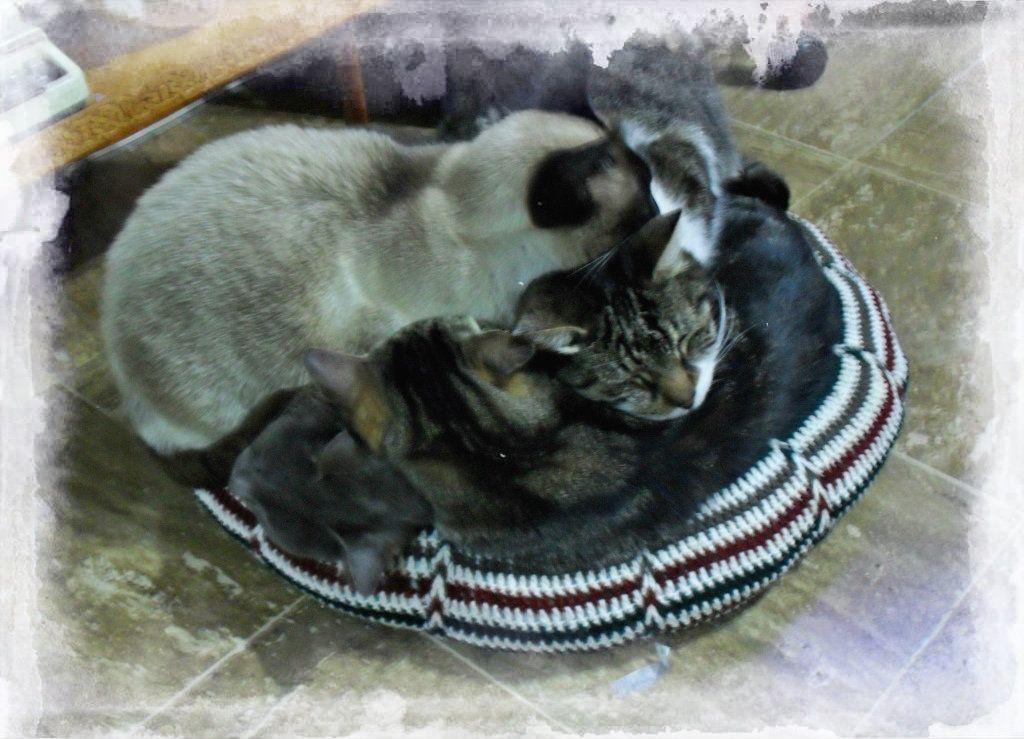 almohadón con gatos