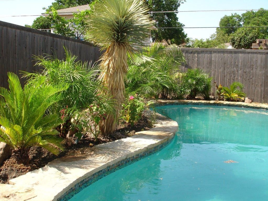 I want some palm trees to go by our pool. Love the tropical look ...