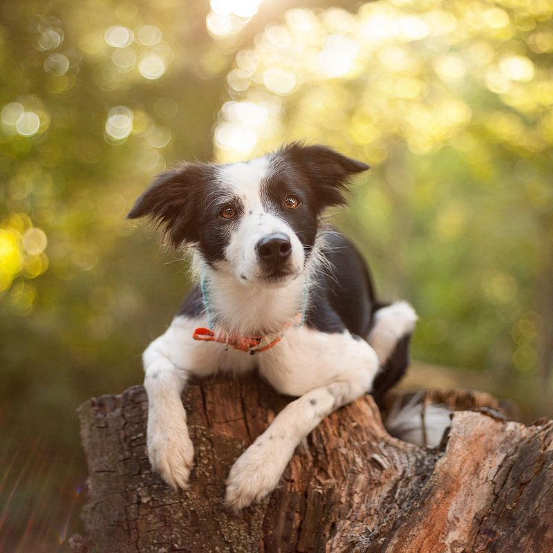 Nita Beautiful Dogs Border Collie Collie