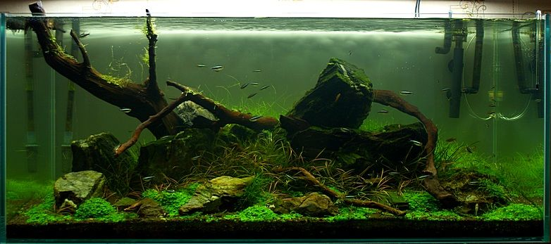 There is nothing like real wood aquarium driftwood to make for Fish tank driftwood