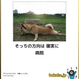 Moto Memo Boxの画像 愉快な動物 おもしろワンちゃん 面白い動物