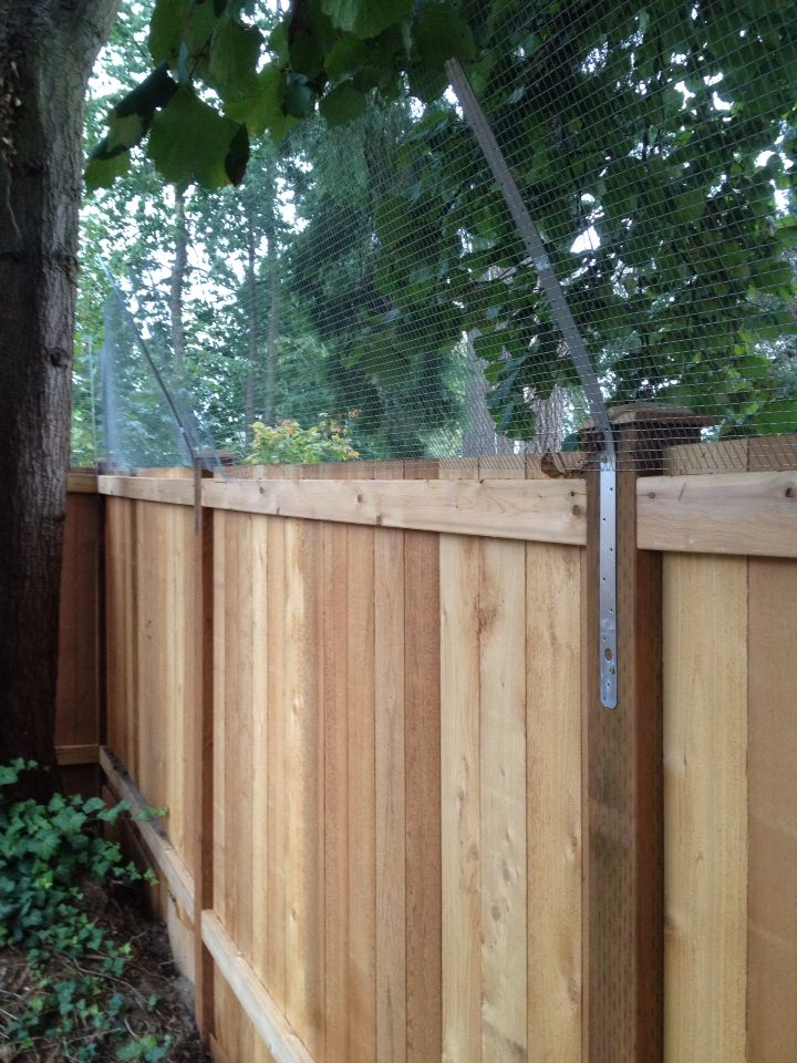 Cat Fence On Pinterest Fencing Cat Enclosure And Cats