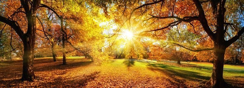 Amazing Panoramic Autumn Scenery In A Park Stock Photo - Image of idyllic, outside: 100781492 #autumnscenery