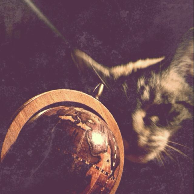 Cat rules the world