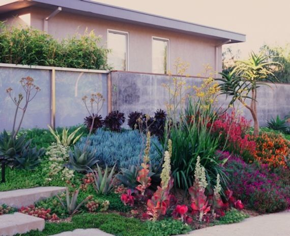 Very colorful drought resistant landscape! California Drought / Sacramento  Drought - Very Colorful Drought Resistant Landscape! California Drought