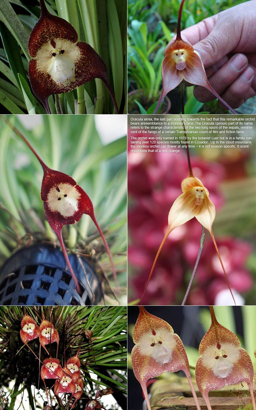 Orchid faces orchids pinterest orchid garden inspiration and