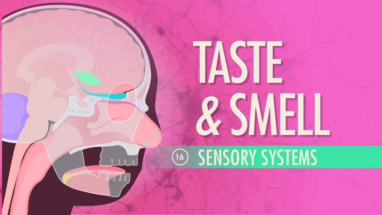 Taste & Smell | Anatomy, Body systems and School