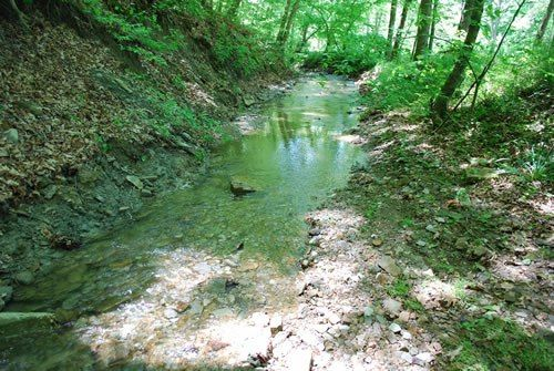 A creek runs thru the property at this Brown County Cottage Estate for sale