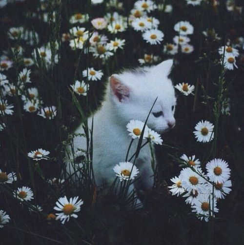 ♥ I love daisys, they're such happy flowers!!!...