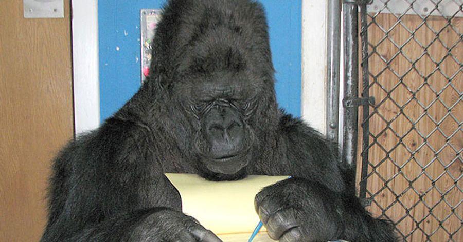 23+ Books like gorillas in the mist info