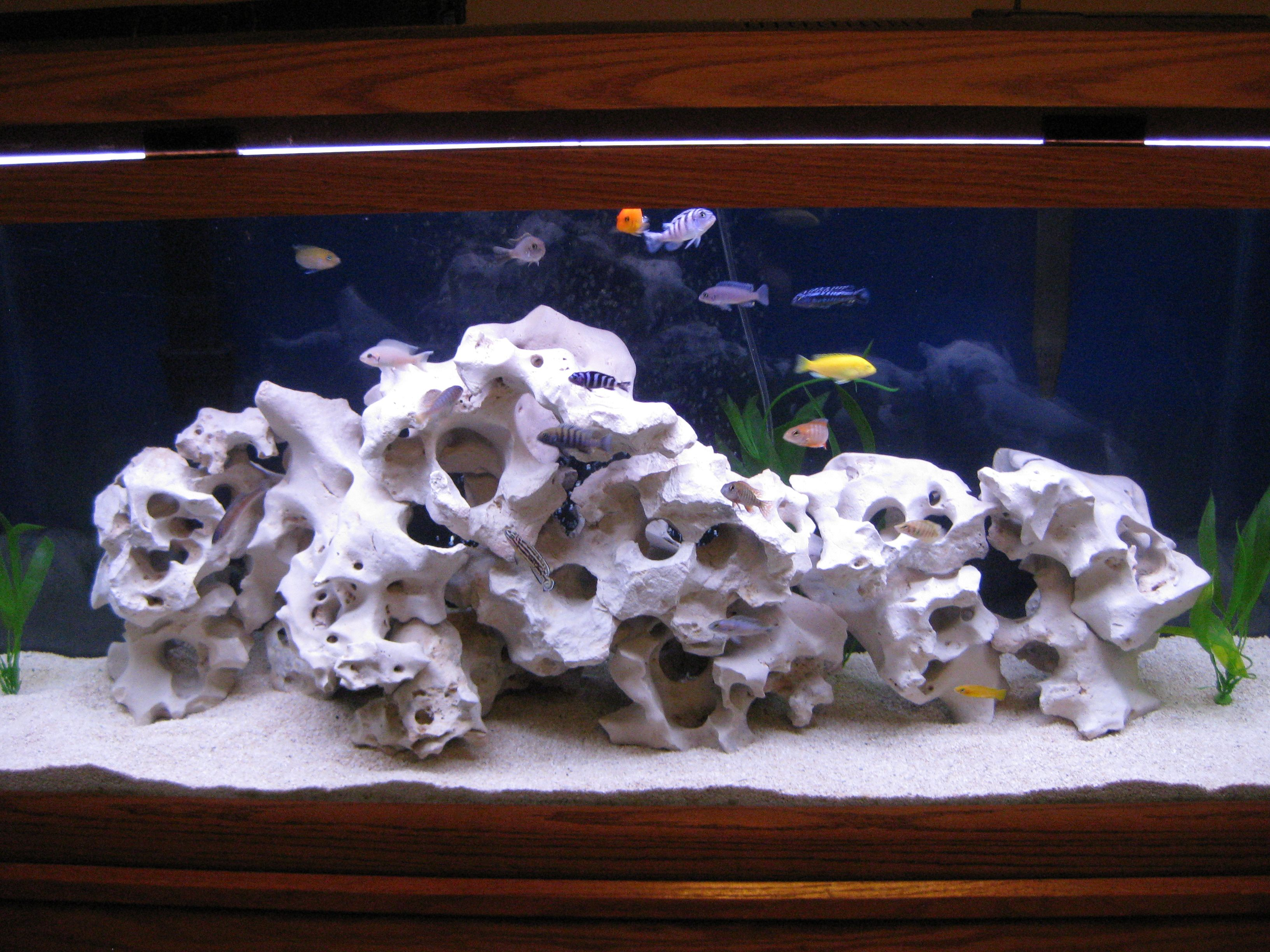 Texas holey rock cichlids texas holy rock for African cichlid rock decoration